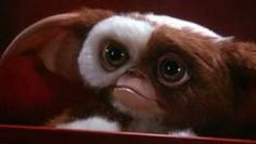 Gizmo the Mogwia loved him in Gremlins 2 when he went all rambo Gremlins Gizmo, Les Gremlins, 80s Movies, Good Movies, Movies Showing, Movies And Tv Shows, Django Desencadenado, Birdman, Bon Film