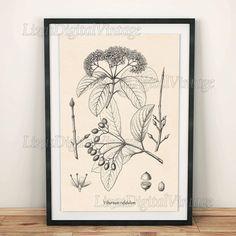#LizasDigitalVintage Tree wall art Viburnum Wall art download by LizasDigitalVintage