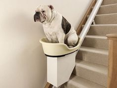 Dog stair lift. This is hilarious.