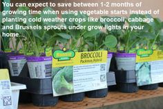 3 quick tips to get your #garden growing with vegetable starts.