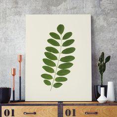 Poster ou Tela MDF - Acácia Leaf