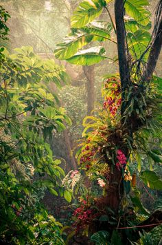 Rain in the jungle by rfbx Shen Zhen China Tropical Forest, Tropical Art, Tropical Paradise, Tropical Plants, Jungle Art, Jungle Scene, Forest Drawing, Motif Floral, Mother Earth