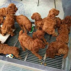 Why did I think this was a pic of fried chicken at first glance?
