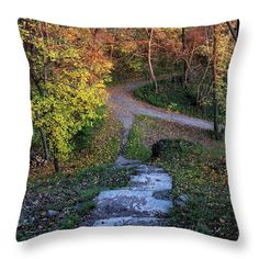Colors of autumn forest. Autumn Forest, Colorful Trees, Decor Ideas, Gift Ideas, Pin Pin, Pillow Sale, Travel Photographer, Basic Colors, Gifts For Girls