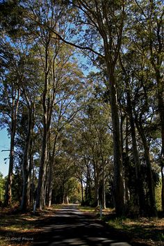Country Road, Trees for Life, Nowra, South Coast NSW, Australia, (c) Geoff Payne