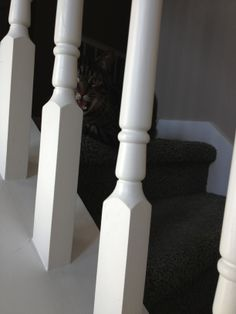 I can growl at you while I am behind these spindles.