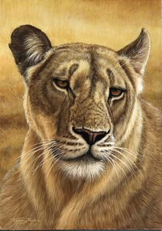 lioness by Jeremy Paul - colored pencil drawing - animal