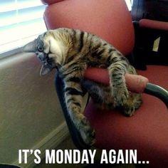 Monday again..
