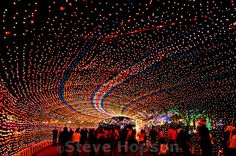 Trail of Lights, Austin Texas