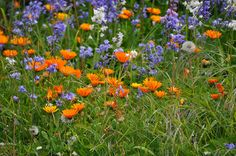 Marigolds, bluebells and dandelions