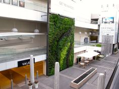 Westfield Century City Living Wall, Vertical Garden, Green Wall - Habitat Horticulture