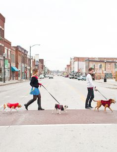 do an abbey road spin off w L + F----Posing with three dogs isn't easy