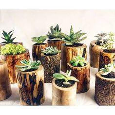 Çiçeklerin olmadığı yerde, insanlar yaşayamaz #dizayn #munidodesign #seedbomb #mothersday #sukulentdizayn #succulent #sukulent #ofisteçiçek #gündem #çiçek #mutfak #minikbahçem #tasarim #bahçe Dilediğiniz ölçülerde.. �� http://turkrazzi.com/ipost/1515550836666130230/?code=BUIUXTKh982