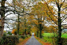 A row of trees still hang onto their autumn colours as November races by (Ribble Valley, Lancashire, England) by images@twiston