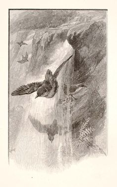 """""""The Bird That Lives in Water-Falls"""", 1886, Henry Wolf, Copy after James Carter Beard, Harper's Monthly (Publisher), photomechanical wood engraving on paper, image: 6 x 3 5/8 in. (15.2 x 9.2 cm), Smithsonian American Art Museum, Transfer from the Archives of American Art, Smithsonian Institution, 1973.130.19"""