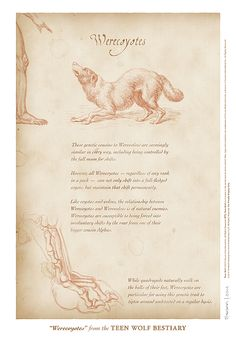 """Werecoyotes"" page from the Teen Wolf Bestiary by Swann Smith. Art prints starting at US$20."