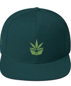 The Higher Education Snapback