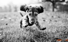 Pequenas raças de cães