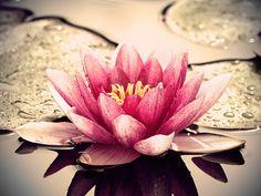 Compaixão e Cuidado de si mesmo http://sobrebudismo.com.br/wp-content/uploads/2014/01/nichiren6.jpg
