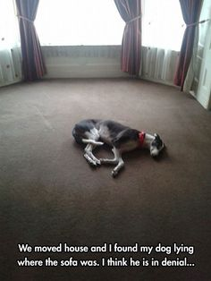 Greyhounds Are Awesome