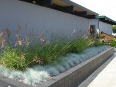 Tall grasses with low silverish grasses for along fence