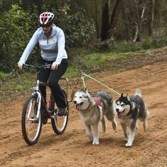 Cycling with your dog made easy with the Springer Bike Attachment! Exercise is just as important for them as for us, so why not grab your wheels, set up the bike attachment and head out with your best friend!
