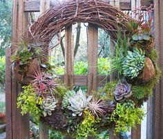 Living wreath made with succulents, ground cover and tillandsia Succulent Ideas, Succulents In Containers, Succulent Planters, Container Plants, Planting Succulents, Garden Crafts, Garden Projects, Garden Art, Wedding Shit