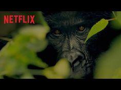 5 documentários no Netflix para discutir preservação dos animais   Cultura em Casa