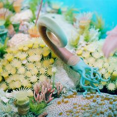 Flowerbed of the Sea