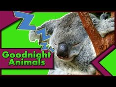 """BEDTIME STORIES PRESENTS: """"Goodnight, Animals"""" Read by Bestselling Author, KIDS LOVE IT!! :D - YouTube"""