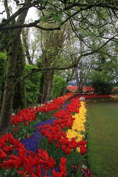 Mt. Vernon Tulips-Day Trip to the Tulip Festival