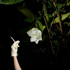 las bellezas  Photographer Diana Kingsley