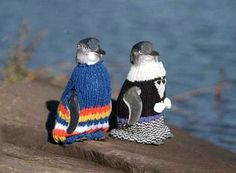 Why Little Penguins At Australia's Phillip Island Sport Stylish Sweaters - Kids News Article