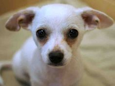 CHASE - ID#A108057 Adopted !