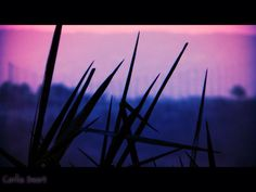 grass at dusk