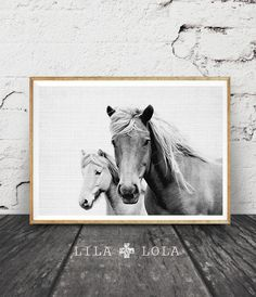 Wall Art Photography horse photo, black and white photography, horse print wall art