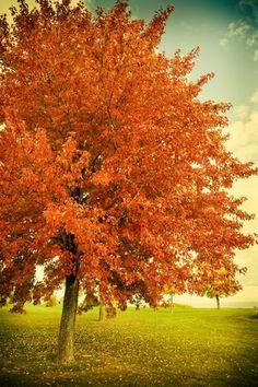 .Blossoming in the Sun.  #fallfoliage