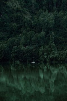 Dark Green Aesthetic, Nature Aesthetic, Aesthetic Colors, Aesthetic Pictures, Beste Iphone Wallpaper, Hidden Photos, Slytherin Aesthetic, Belle Photo, Aesthetic Wallpapers