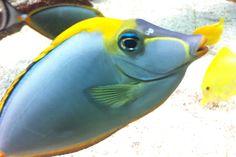 08 Blue Reef Aquarium, Fish, Pets, Animals, Animales, Animaux, Pisces, Animal, Animais