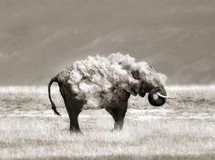 Animaux Sauvages par Marina Cano (20)