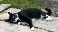A female black and white domestic cat was lost on Fri, Nov 22nd, 2013 in St Joseph's Terrace, Passage West, Cork