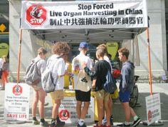 Austrália coleta assinaturas em apoio ao fim da extração ilegal de órgãos na China | #Crime, #Extração, #FalunGong, #Ilegal, #MinghuiOrg, #Órgãos, #PartidoComunistaChinês, #Regime