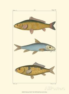 Freshwater Fish II Prints at AllPosters.com