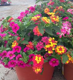 container gardens wholesale