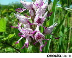 imagenes de flores mas raras del mundo - Buscar con Google