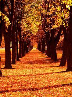 9211 Autumn Path Backdrop
