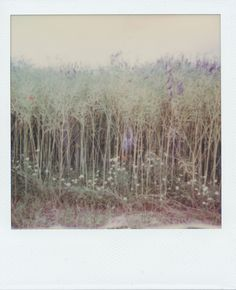 Frau Koriander posted a photo:  Polaroid Land Camera Revue 1001  Impossible Instant Film Color for SX-70  expired for half a year (made in 1/2015)  Canon CanoScan 8800F  blog  Homepage  Instagram  Getty Images  Tumblr