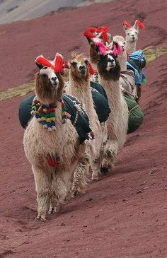 Llama Buddhism ☸️