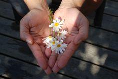 Fleur, Mains, Donnant, Donner - Image gratuite sur Pixabay