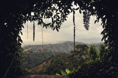 An Afternoon at Strawberry Hill || Kingston, Jamaica #travel #Caribbean #Mountains